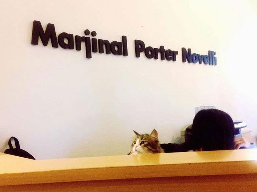 Marjinal Porter Novelli'den yeni bir hizmet