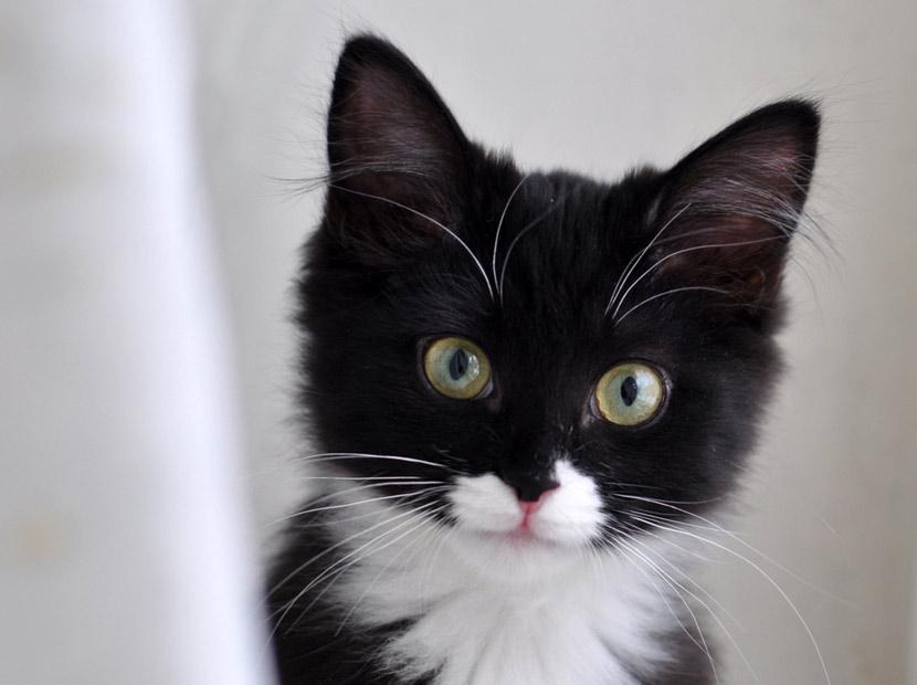 Kediler gerçekten de 9 canlı mıdır?