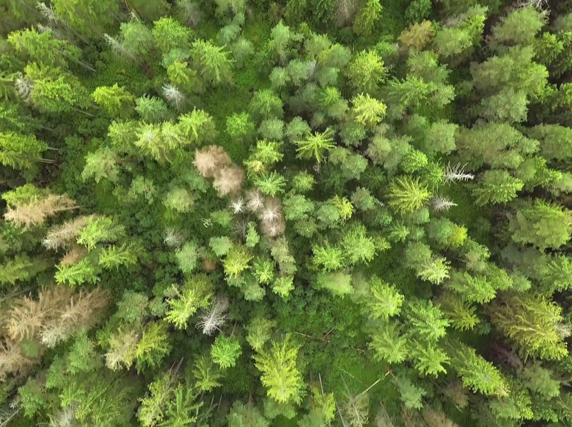 Daha yeşil bir Türkiye için 11 milyon ağaç