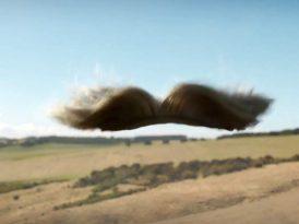 Bir peruğun uçuş keyfi