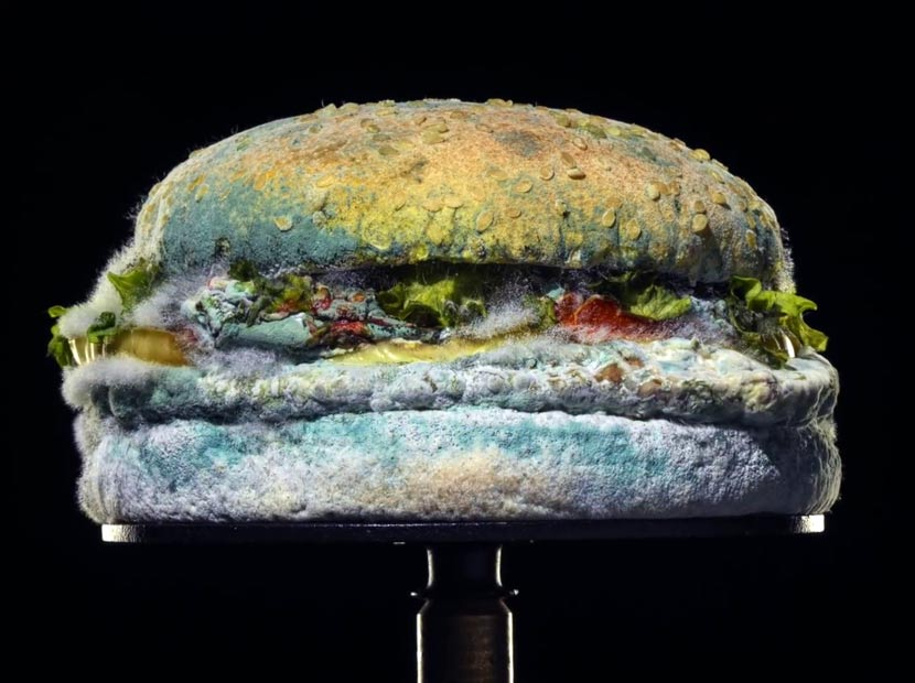 Burger King sunar: Küflü Whopper