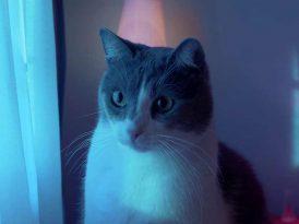 Durex Türkiye kediler için devrede