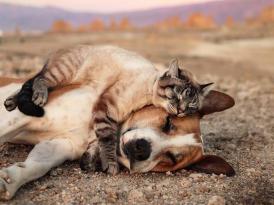 Markalardan Dünya Hayvanları Koruma Günü mesajları