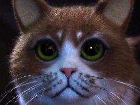 adam&eveDDB'den kediler için korku filmi