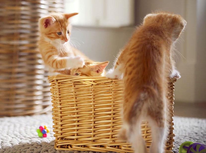 Mutlu kediler için kaliteli mama