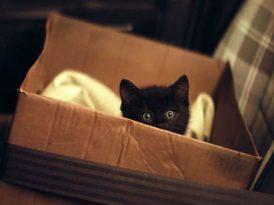 İyi şans elçisi kara kedi