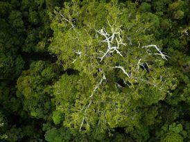 Suya düşen hayallerle yeşeren Umut Ormanı