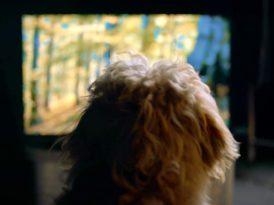 Köpeklere özel yılbaşı programı